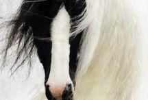 Horses & Ponies <3