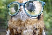 OWLS / by Maya Fraser-Philbin