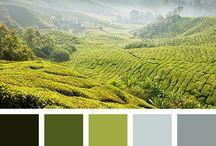 Farbpaletten Wandfarbe