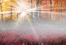 Critical Success Factors / Lite the fire of success that is dormant inside your soul.