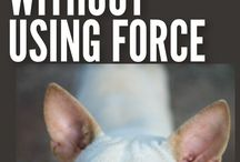 walking your dog Without Force