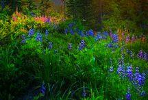 Profound Nature