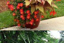 Gardening: Container Gardens.