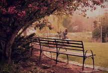 Benches / by Monica Warford