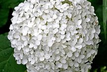 Gardening : White