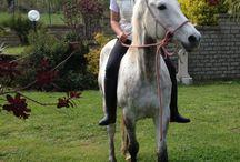 Isola felice / I nostri cavalli