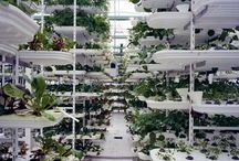 Sky farming