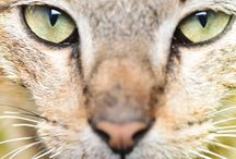 Veterinary - Interesting Facts about Pets