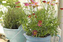 Gardening / Learn to love my garden