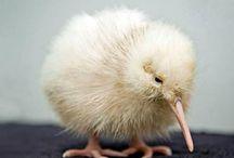 Animals of NZ!