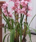 Things Orchidaceae, the Orchid family