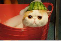 CATS MEOW!!!