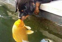 Pets - every home needs 1.