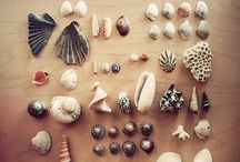 Shells and things found on the beach
