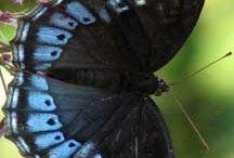Butterflies / by Helen Langhorne