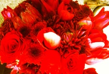 J'Adore Floral and Event Designs  / by Joan Mach