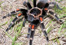 Spinnen-Spider