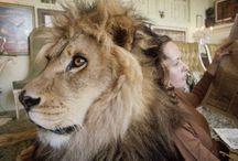 lion pet & Hedren