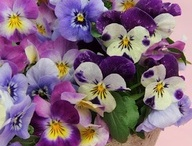 Annuals and Summer Specials