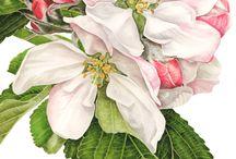 Ilustração Botanica