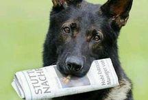 Mirame a los ojos. DOGS / Retratos de perros