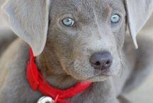 joli chien