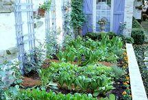Trädgård drömmar