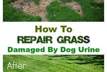 damage grass