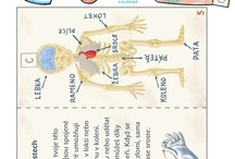 lidské telo