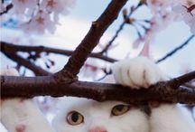 岩合さん 猫ちゃん達♪♪
