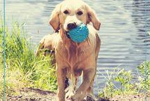 Four Paws / Photos of doggy's.