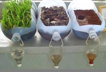 Mini Eco & Gardening Lessons