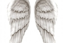 wings and feathers / by Merinda Schaub