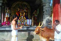 Puja Service