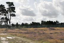 Natuurgebieden op de Utrechtse Heuvelrug