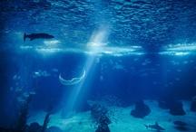 Marine Environmental Issues