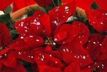 Christmas In Green & Red / by Connie