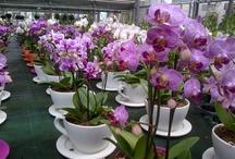 Piante e orchidee