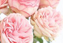 Helen & Steve / Wedding Flowers Inspiration