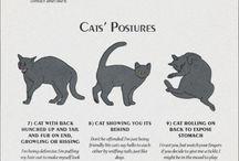 Mylovelycat
