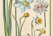 Botanical prints and monographs