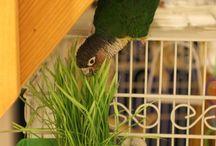 Parrot Paradise