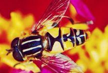My Bugs / Own shots