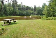 Bretzfelder Park / Bretzfelder Memorial Park in Bethlehem NH is a great palce to take hike and learn about wildlife and trees. Three interpretive trails.