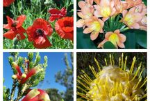 Flowers around the world