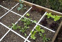 Økologisk hagebruk