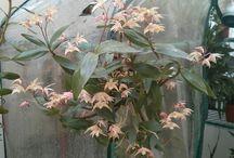 orchidee 2015