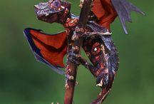 *dragões*