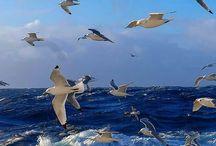 THE SEA-FREE...DIVE-SAND-ISLANDS