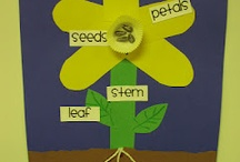 Parts of a plant / Science